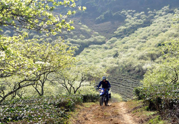 Moc Chau - hottest destination in the North after Tet