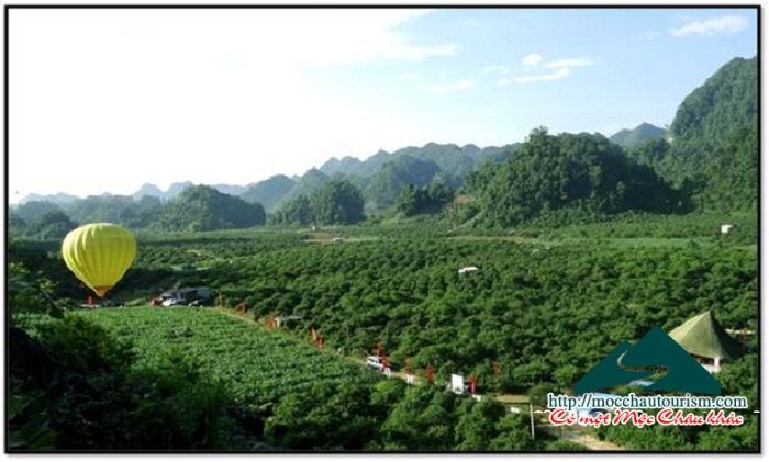 Moc Chau district prepare organizations Festival picking fruit The Second – 2015.