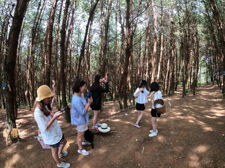 Rừng thông Hua Tạt Vân Hồ - Mộc Châu