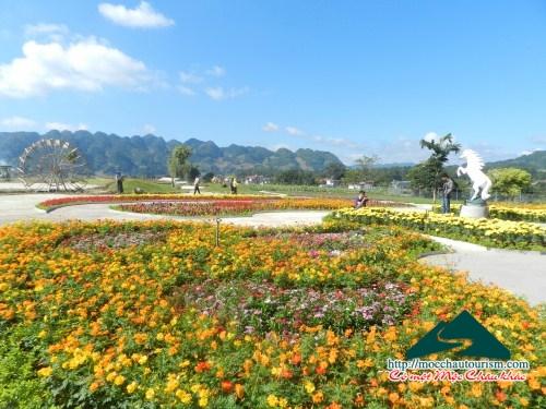 Love garden - Điểm đến mới tại Mộc Châu