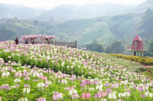Tới thăm Huyện Mộc Châu thiên đàng của  tây bắc