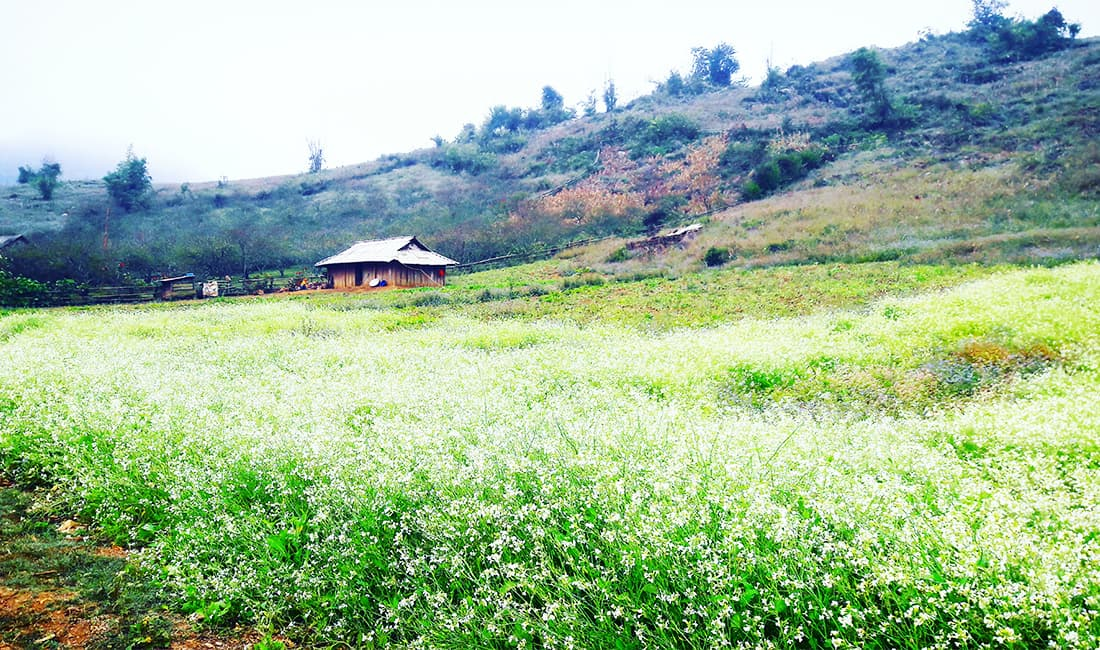 Ba Phách (Pa Phách) đẹp tựa thiên đường ở Mộc Châu