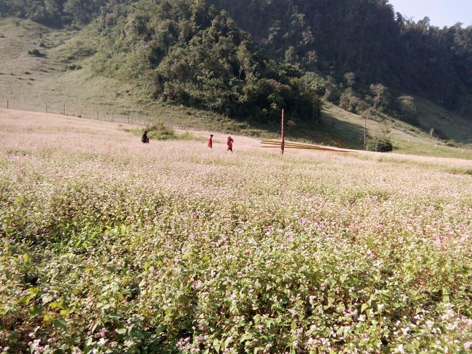 tam-giac-mach-long-luong