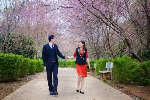 Thiên đường hoa anh đào ở công viên Pha Luông, Mộc Châu