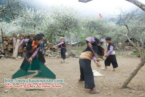 Hmong people eat Tet