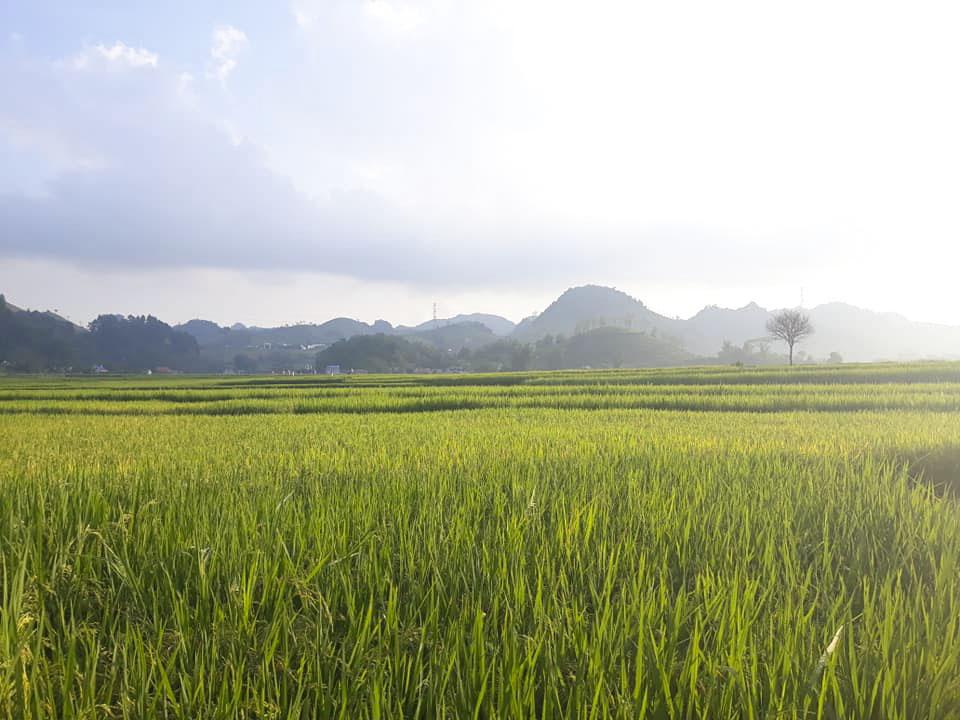 Những trải nghiệm hấp dẫn ở bản Chiềng Đi, Mộc Châu