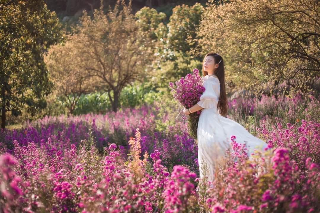 mùa hoa mộc châu